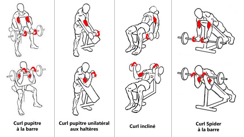 Curl avec inclinaison pour biceps