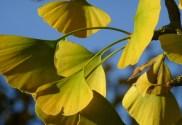 comment plantes pour lutter contre la fatigue physique et comment les utiliser facilement en infusion et décoction.
