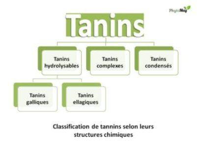 classification tanins