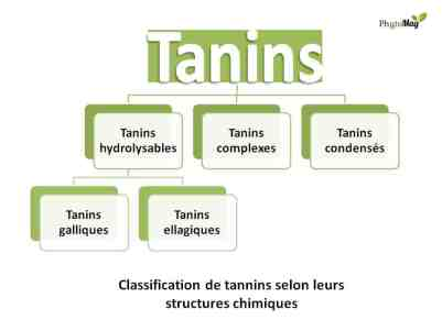classification tanins