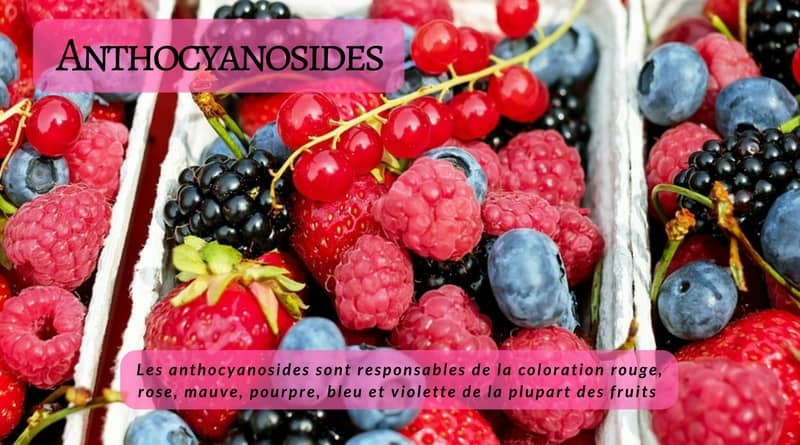 Anthocyanosides- fruits rouges