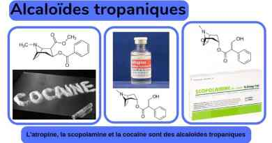 Alcaloïdes tropaniques