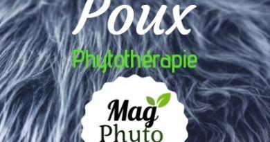 poux phytothérapie