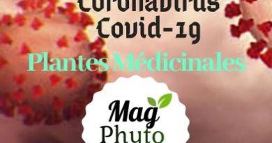 Coronavirus plantes médicinales