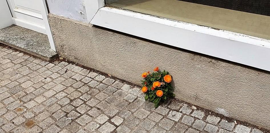 Schröding Blume