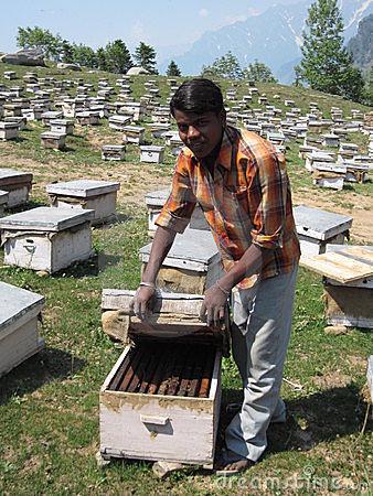 explorao-agrcola-da-abelha-em-india-14150563
