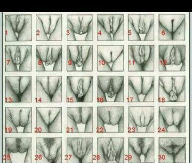 Vagina Normalization Comment Which Number Yours Is Ill Be Honest Mine Is Most Like   E2 98 86 Dont Be Shy Help Normalize All Types Of Vaginas  E2 99 A1
