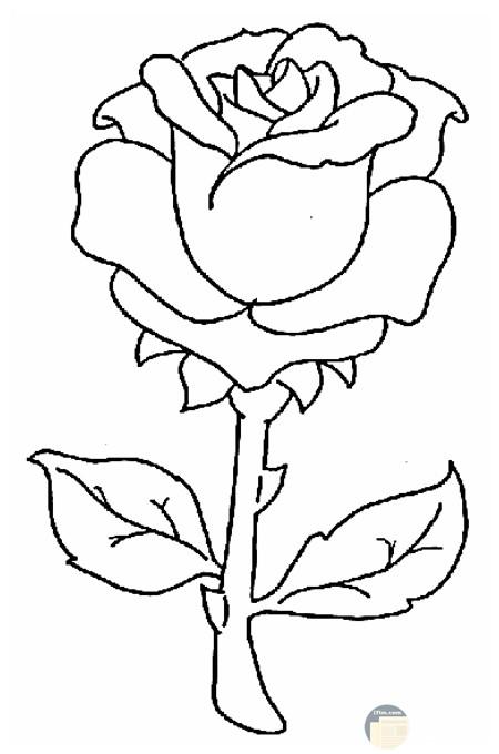رسم وردة للتلوين ورود كبيرة للتلوين