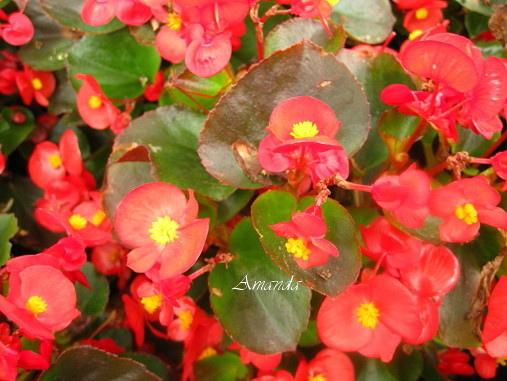 花朵.bmp