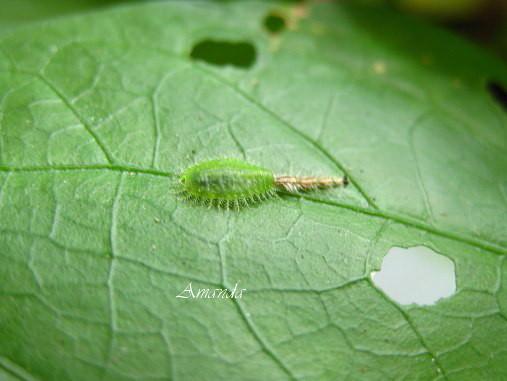 這是甚麼蟲.jpg