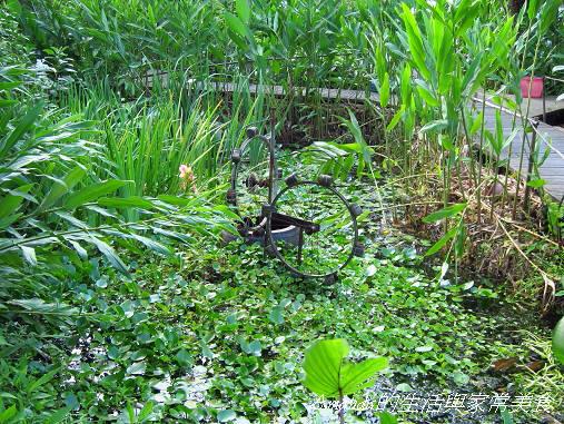 花泉農場-廢棄輪胎水車