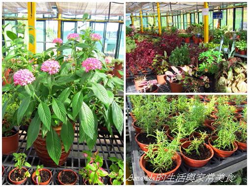溫室花朵1