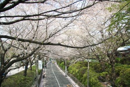 尋找福山雅治的櫻坂 …在多摩川的田園調布 …