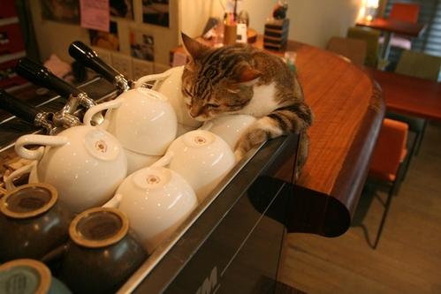 睡吧玩吧吃吧!…..貓咪咖啡館