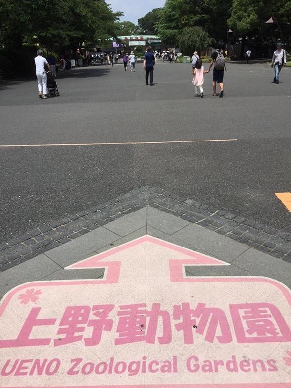 好開心! 日本上野動物園內的動物吹 Dyson 增流扇 11222362_10203296925182426_5695237436275522037_n