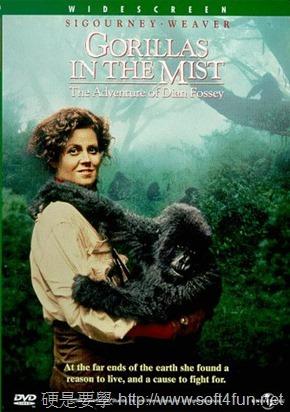 Google 首頁塗鴉:Dian Fossey 美國動物學家 82 歲誕辰 Dian-Fossey-3