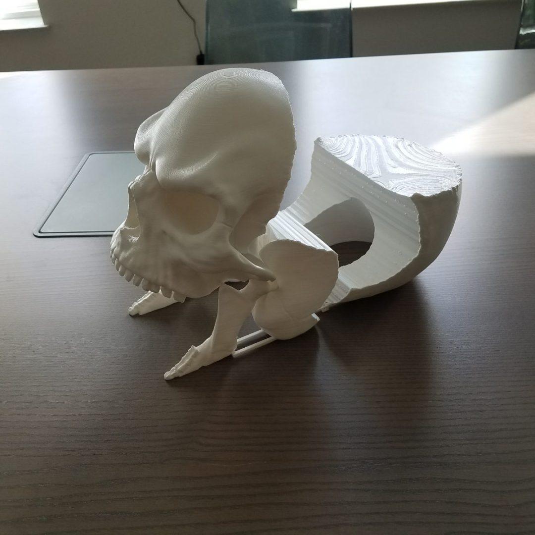 3-D Printed Skull Model Open