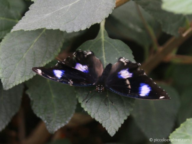 Butterfly House Whipsnade Zoo