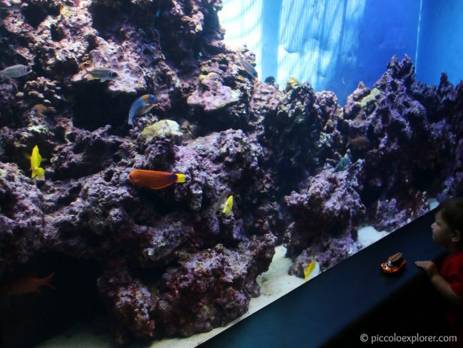 Waikiki Aquarium Tips for Toddlers