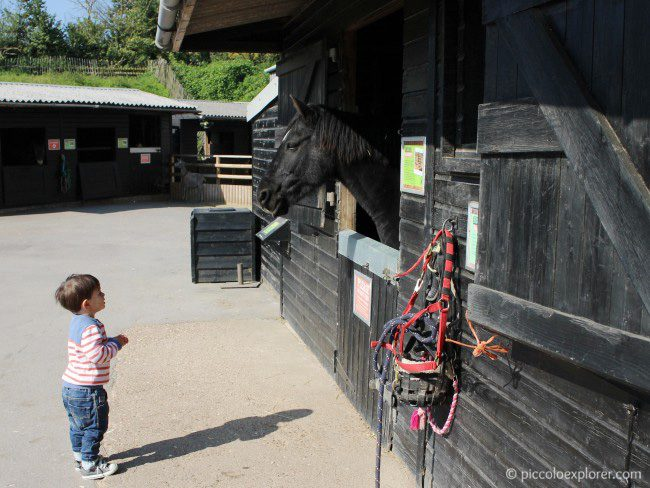 Horse stables at Bocketts Farm Park Surrey