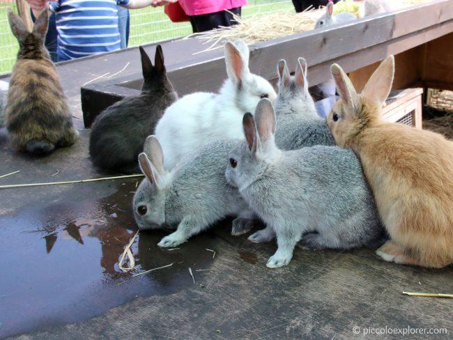 Rabbits at Jenny Wren Farm at Birdworld