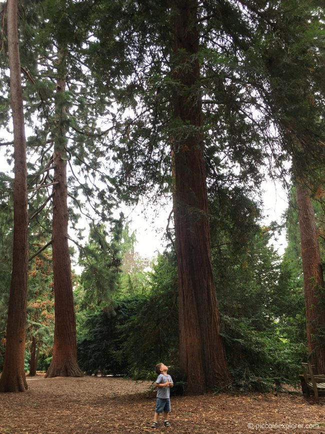 Redwood Grove, Kew Gardens London