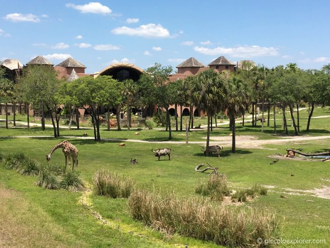 Savanna room view at Animal Kingdom Lodge, Orlando