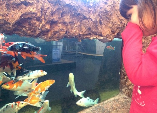Unexpected Places to Take a Toddler on a Rainy Day - Aquarium