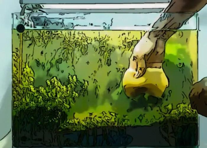 Why Aquarium Water Turns Green?