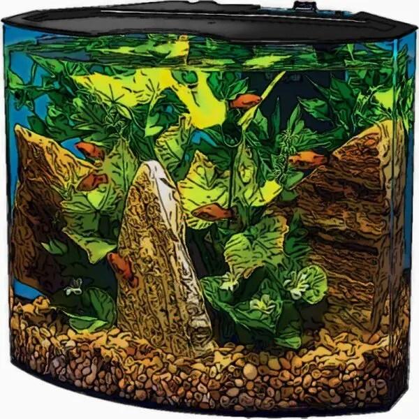 5 Gallon Curved Fish Tank