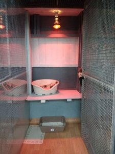 Cosy cattery and kennels