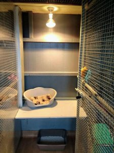 Warm kennels and cattery