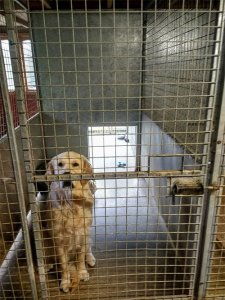 Dog in one of our kennels