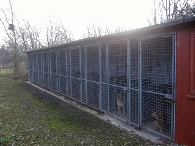 Our kennels with a few watching guests