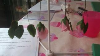 sugar rose, rose leaves