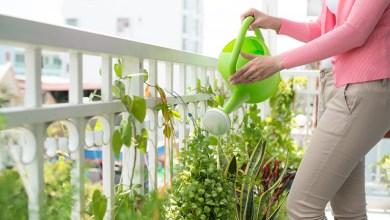 Giardinaggio in estate
