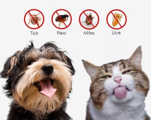 Ways To Kill Ticks And Fleas On Cats & Dogs