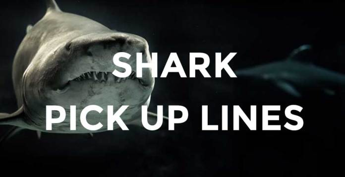 shark pick up lines