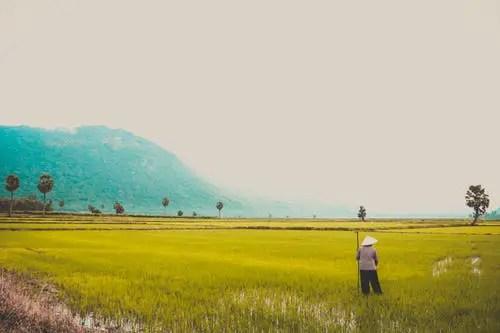 vietnamese Pick Up Lines