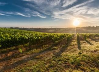 wine Pick Up Lines