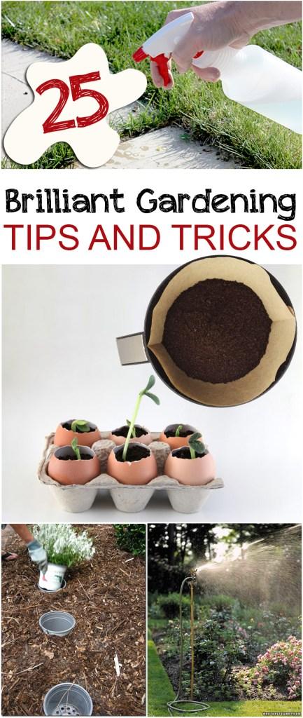 Gardening, gardening hacks, gardening tips, easy gardening tips, popular pin, outdoor living, indoor gardening, easy gardening, organic gardening.