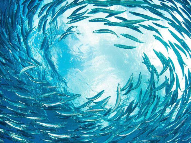 Circle OfLife-OceanSwirlCaribbean