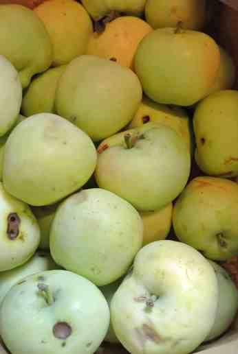 Farm Apples