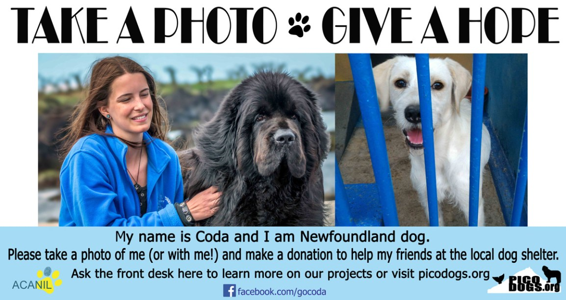 Help abandoned dogs of Pico Island