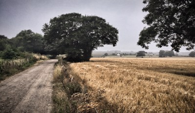 Day 311.2 – A desaturated start