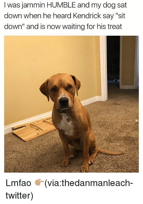 49 Dog Memes To Make Your Day 100x Better Doggowner