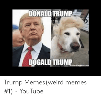 Memes, Weird, and youtube.com: DONALO TRUMP  DOGALD TRUMP  emeshoppencom Trump Memes(weird memes #1) - YouTube