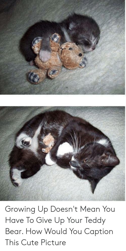 Growing Up Doesn T Mean You Have To Give Up Your Teddy Bear How