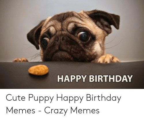 25 Best Memes About Cute Puppy Happy Birthday Cute Puppy Happy Birthday Memes