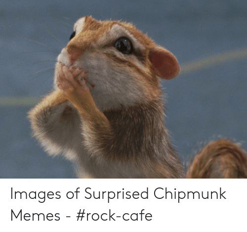 Chipmunks Memes Best Collection Of Funny Chipmunks Pictures On Ifunny